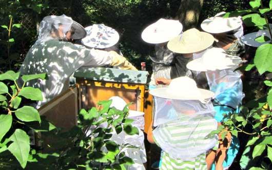 Bienenretter-Imker-small-2
