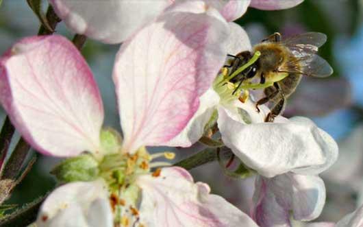 Bienenretter-Imker-small